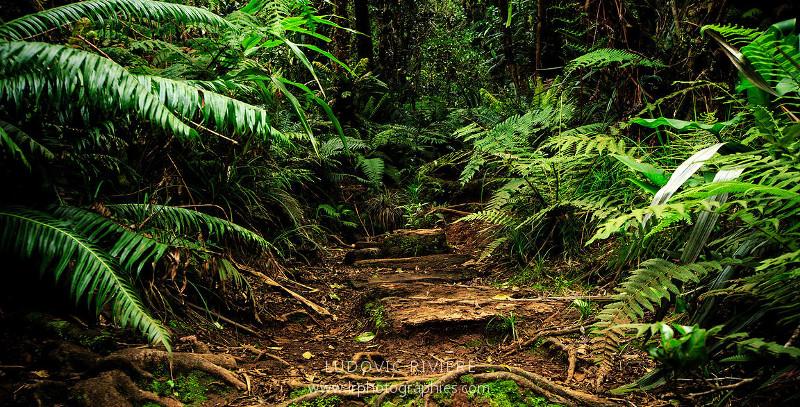 Trail Réunion
